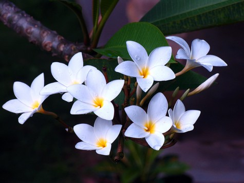 Top 10 plants for your garden