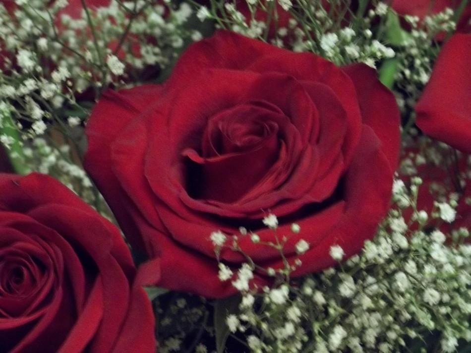 Timeless+Valentine%27s+Day