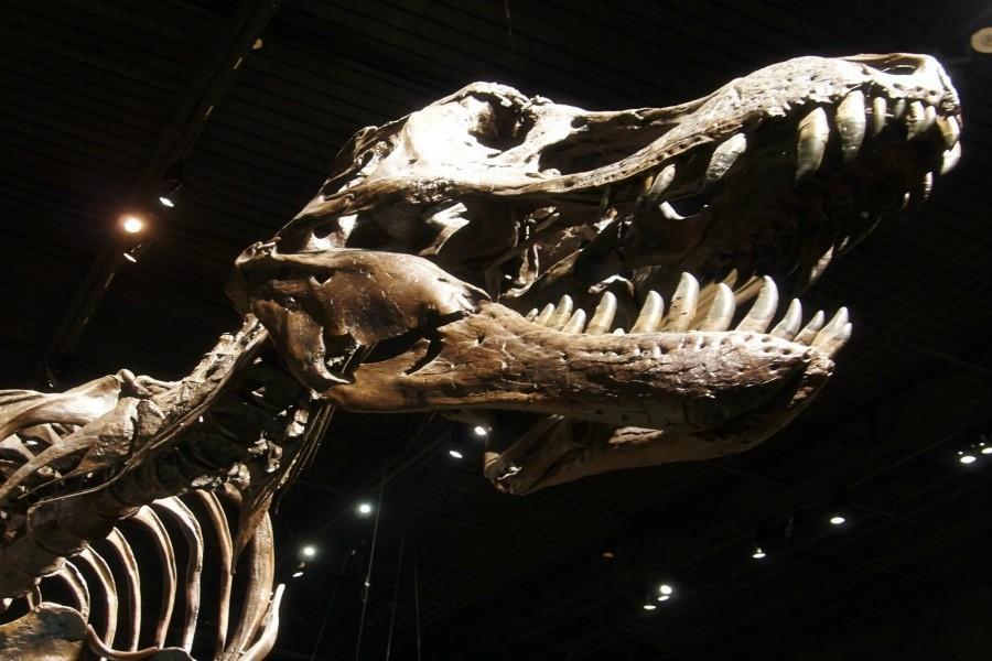 Jurassic+World+has+earned+%241+billion+worldwide.+