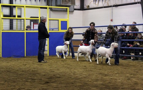 FFA hogs the success