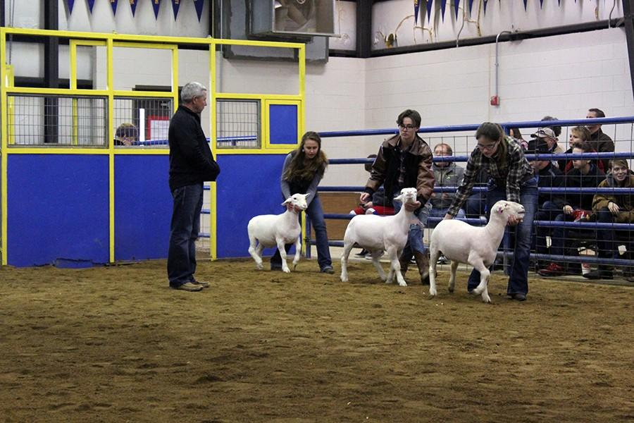 Sophomore+Madison+St.+John+%28back%29+presents+her+hair+sheep.+She+placed+3rd.