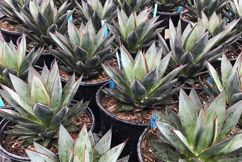 Garden Center Review: East Austin Succulents
