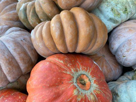 Pumpkin patch it up